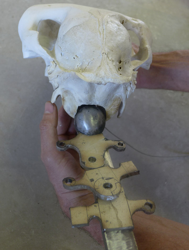 Fitting the skull onto the support